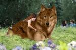 little_girl_and_her_wolf_by_twiaddictd38gz0s